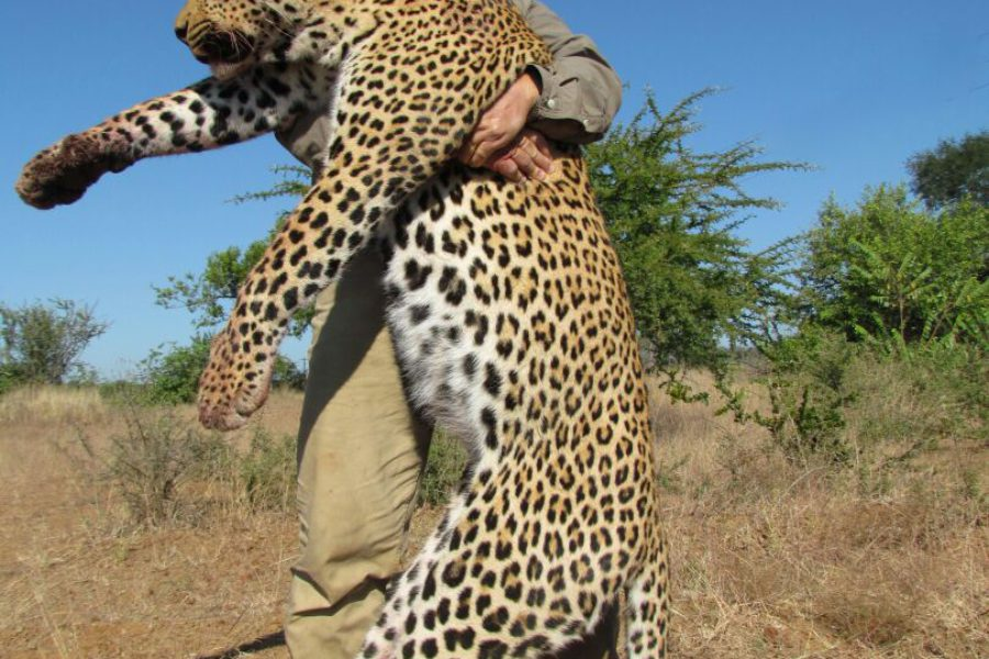 Rifle Hunting Safari, Rifle hunting, Hunting safari, Zimbabwe, rifle, Rosslyn Safaris, hunting, bow, rifle, premium safari, luxury