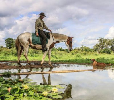 Rosslyn safaris on horseback