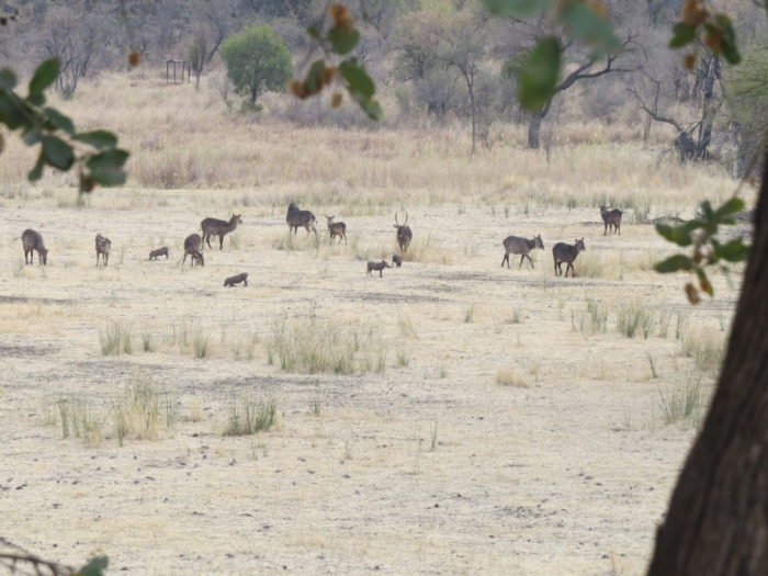 Benefits of hunting small populations
