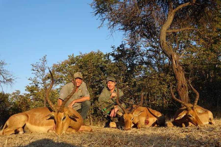 Bow Hunting on Rosslyn Safaris Zimbabwe